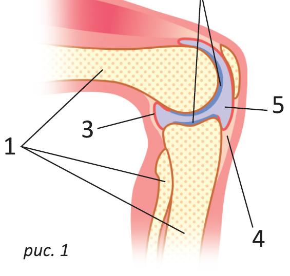 препарат для лечения артроза сустава актембра