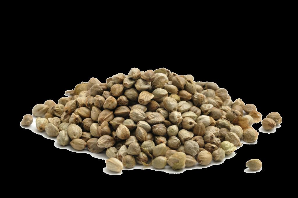 Купить в новосибирске семена конопли конопля дома где выращивать